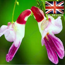 RARO PAPPAGALLO Orchidea Fiore, - 5 semi vitali-UK Venditore
