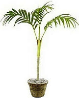 One 7 foot Artificial Golden Palm Tree in Basket Home Decor Arrangement Plant