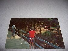 ANIMAL FOREST BUFFALOS CHARLES TOWN LANDING CHARLESTON SC. VTG POSTCARD