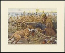 CHESAPEAKE BAY CURLY COATED RETRIEVER IRISH WATER SPANIEL DOG SHOOTING PRINT