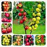 25 Apple Tree Fruit Seeds Malus Mixed Perennial Bonsai Plant Home Garden Decor