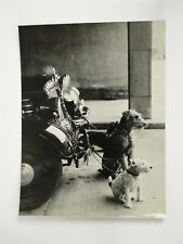 Dogs Tied To Vintage Car Bumper c1940s Photo