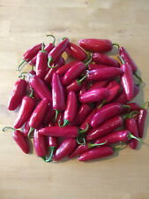 Jalapeno M pepper seed ~  organically grown ~ 100 to 1000 bulk seeds