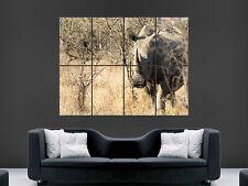 Rhino Wild Africa Safari gran impresión de arte Poster Gigante Grande