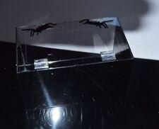 Clear/Gloss Black Acrylic Terrestrial Enclosure