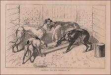 GILDEROY, Stud Greyhound Dog by R H Moore, antique engraving original 1878