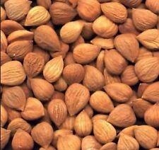 1 Pound Organic Bitter Raw Apricot Kernels Seeds Bonus 40 PAGE Info Seed Kernel