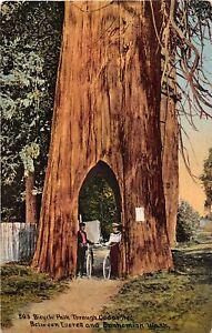 H56/ Snohomish Everett Washington Postcard Bicycle Path Through Cedar Tree