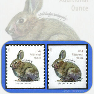 2021  BRUSH RABBIT  Pane & Coil Set  USPS Forever® Additional Ounce Stamps MINT
