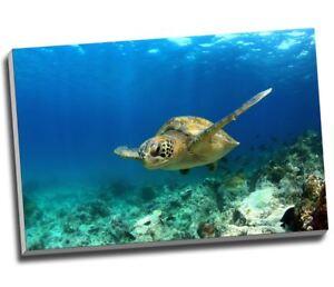 "Green Sea Turtle Swimming Canvas Print Wall Art 30x20"" A1"