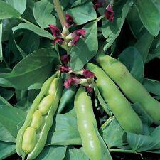 vegetal - Amplio Judía Carmesí con flores - 75 Semillas Sembrar Primavera