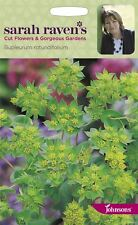 Johnsons - Sarah Raven's Cut Flowers - Bupleurum rotundifolium - 200