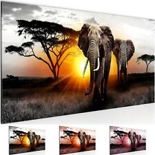 WANDBILDER XXL BILDER Afrika Elefant VLIES LEINWAND BILD KUNSTDRUCK 007612P
