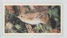 1980 Brooke Bond Woodland Wildlife Tea Base #9 Wood Warbler Non-Sports Card 1i3