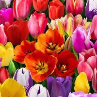 Digital Garden~Tulip Panel 24'' x 44'' Digital Cotton Fabric by Elizabeth Studio