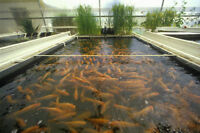 Fish Culture Farming CD Ponds Hatching Hatchery 30 Books Pisciculture Trout