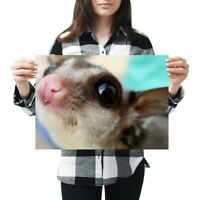 A3 - Cute Flying Squirrel Face Poster 42X29.7cm280gsm #3281