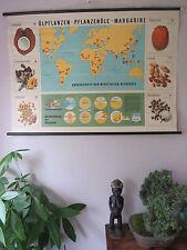 VINTAGE botanico scuola grafico-MARGARINA COCCO Peanut Olio di Girasole Palm di soia