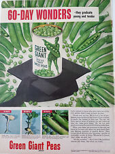 1951 Green Giant Peas 60 Day Wonders Graduate Young and Tender Color Original Ad