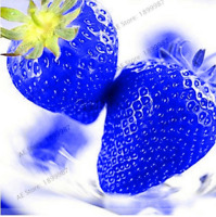 500 PCS Seeds Blue Strawberry Bonsai Fruit Edible Plants Free Shipping 2019 Rare