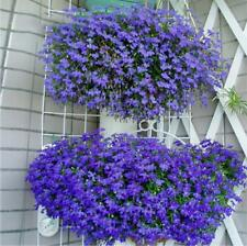 1000 pcs flower Seeds Lobelia(Lobelia Erinus Blue Carpet)