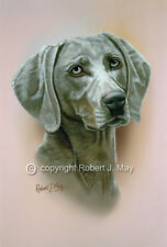 Weimaraner Head Study by Robert J. May