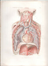 Antique Print-HUMAN ANATOMY Chest and neck superficial plane ANGER 1869