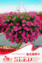 Original Package 50 Semi-Trailing Petunia Seeds Hanging Plant Seeds Hot G004