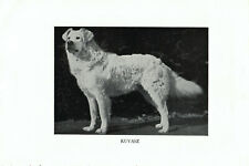 1947 Complete Dog Book - Kuvasz on one side and Great Pyrenees and Komondorok.