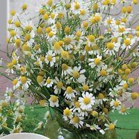 Moldavian dragonhead Seeds Lemon Aroma 0,3 g Dracocephalum moldavicum