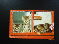 O-1970 aus 1994 , katzenbabies,2000er,   voll