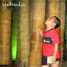 20 Semi freschi di Bambù Del Drago Dendrocalamus Sinicus,Il piu grande Bamboo