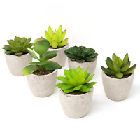 Set of 6 Artificial Succulent Plants Small Faux Cacti Indoor & Outdoor M&W