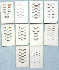 1872 Antique prints of British moths x 10 Rev Morris Lithograph Entomology Lot 4