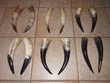 "ONE SET (PAIR) 13""-15"" STEER HORN HORNS POLISHED COW black powder bull"
