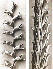 1942 Original Aufdruck Foto Gravur Platte 22. Karl Blossfeldt Abstrakt Botanisch