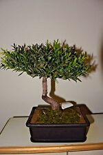 """Artificial Tea Leaf Bonsai Tree Silk Decorative Plant 9"""" H x 6"""" L x 4""""W"""