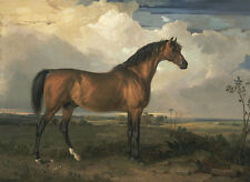 Eagle, a Celebrated Stallion James Ward Pferde Weide Wolken Wiese B A3 00061