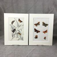 1897 Schmetterling Klein Heath Antik Viktorianisch Chromolithographie Aufdrücke