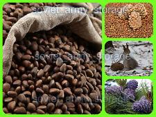 Pine nuts Siberia! 1 pound. Fresh 2019! High quality! Handmade processing! Best!