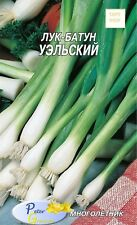 semillas de Cebollas de primavera Países de Gales - 300 semillas