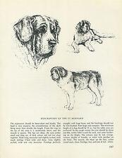 SAINT BERNARD VINTAGE DOG PRINT SKETCH PAGE ARTIST BRIDGET OLERENSHAW