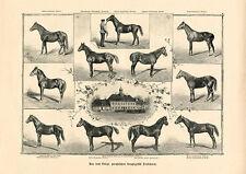 Trakehnen Trakehner Reitpferde Warmblut Gestüt Preußen 1898 Büttenfaks 6