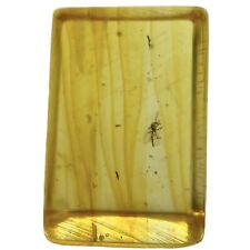 More details for baltic amber with fossil insect inclusion fse353 ✔100% genuine ✔uk seller