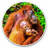 2 x Vinyl Stickers 10cm - Orangutan in Jungle Indonesia Cool Gift #3540