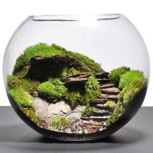 Clear Glass fish bowl round Terrarium jar 36 cm planter Handmade centerpiece