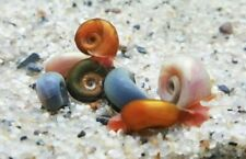 8+Pink/Red/Blu leopard/Mix color Ramshorn Snails With 2 Type Free Floating Plant
