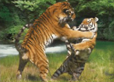 TIGERS PLAYING - 3D FLIP PICTURE 400mm X 300mm (NEW)