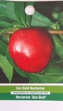 4'-5' Sun Gold Nectarine Tree Live Healthy Fruit Trees Plant New Home Garden