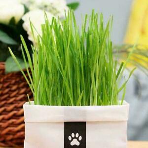 Cat Grass Planting Bag Cat Grass DIY Soilless Culture Lemongrass KitHerb Ed I5B6